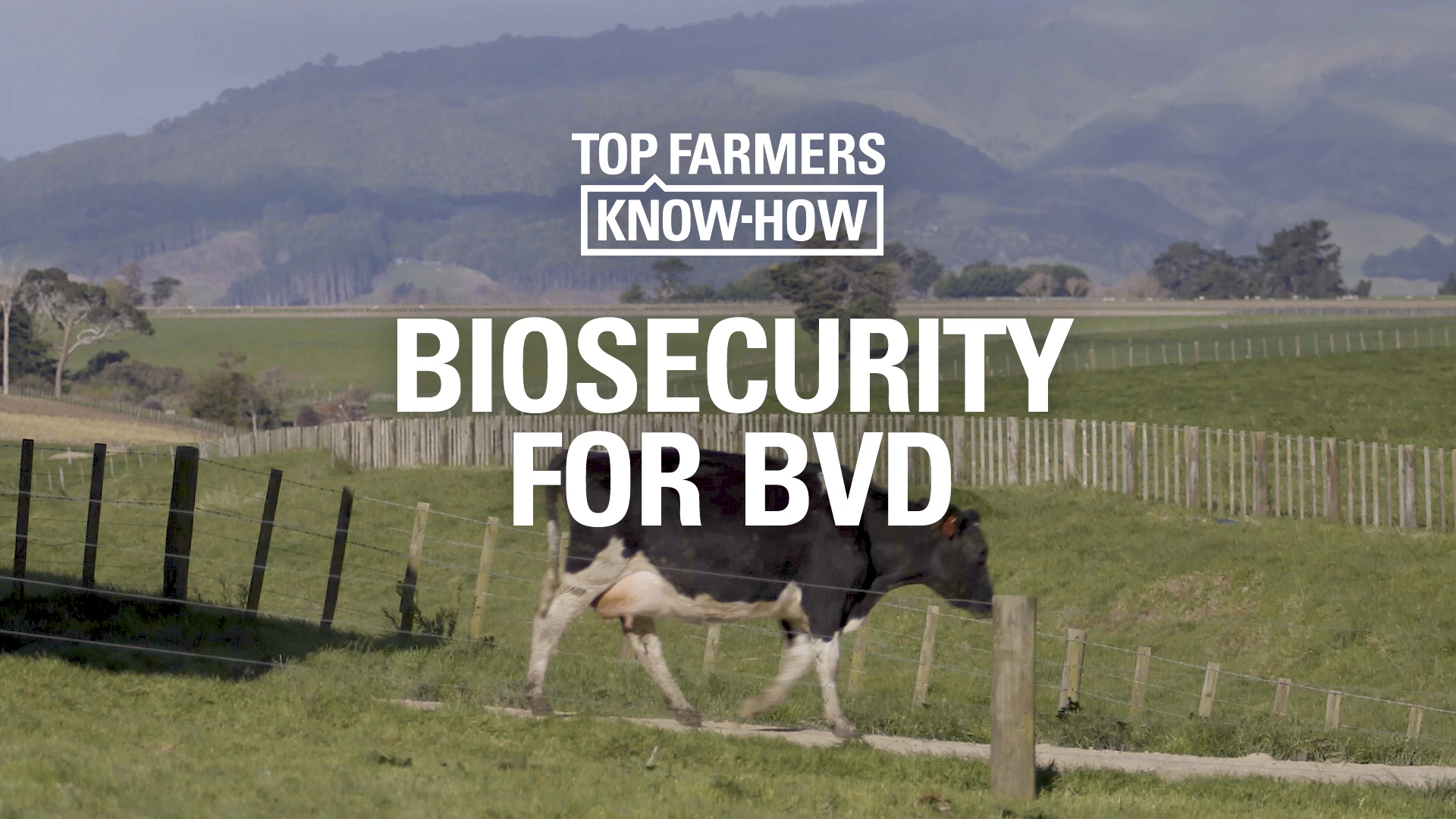 Biosecurity for BVD