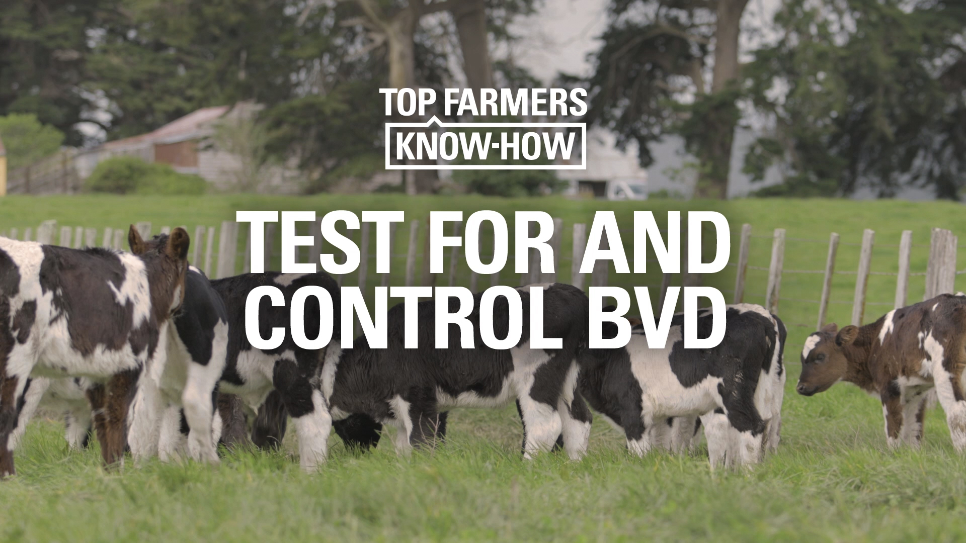 Test for and control BVD