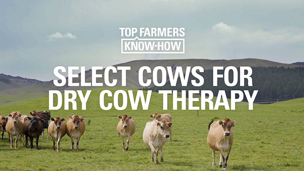 Insert dry cow therapy