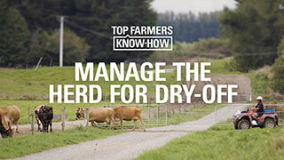 Manage the herd for dry-off
