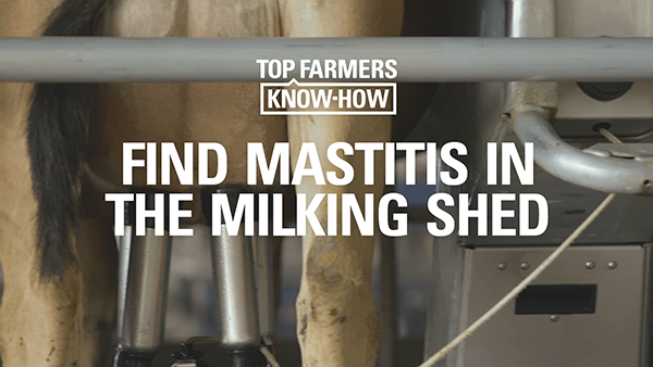 MASTITIS SERIES: FIND MASTITIS IN THE MILKING SHED